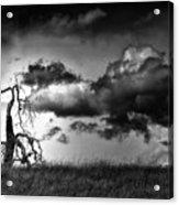 Loan Tree Acrylic Print