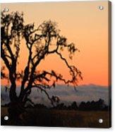 Loan Tree Overlooking Fog Acrylic Print