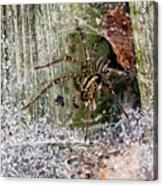 Lobo's Web Acrylic Print