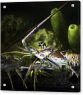 Lobster In Love Acrylic Print
