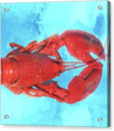 Lobster On Turquoise Acrylic Print