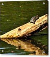 Log Turtle L 3584 Acrylic Print