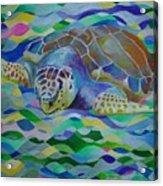 Loggerhead Turtle Acrylic Print