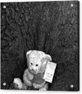 Lone Bear Acrylic Print