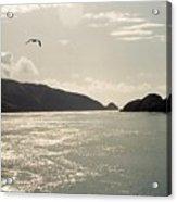 Lone Bird Over Marlborough Sounds Nz Acrylic Print