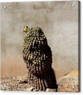 Lone Cactus In Sepia Tone Acrylic Print