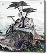 Lone California Tree Acrylic Print