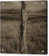 Lone Cone Post Acrylic Print