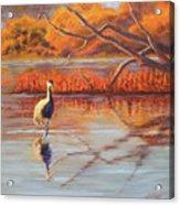 Lone Crane Still Water Acrylic Print