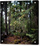 Lone Dogwood Acrylic Print