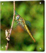 Lone Dragonfly Acrylic Print