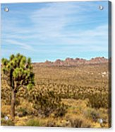 Lone Joshua Tree - Pleasant Valley Acrylic Print