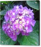 Lone Lilac Acrylic Print