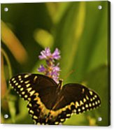Lone Monarch Acrylic Print