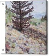 Lone Mountain Tree Acrylic Print