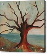 Lone Oak - Gulf Coast Acrylic Print