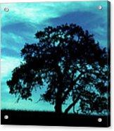 Lone Oak Acrylic Print