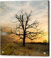 Lone Oak On The Marsh Acrylic Print