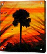 Lone Palm Florida Acrylic Print