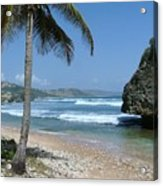 Lone Palm On Barbados Coast Acrylic Print