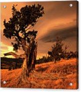 Lone Pine Whaleback Ridge Acrylic Print