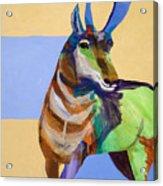 Lone Pronghorn Acrylic Print