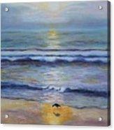 Lone Sandpiper Acrylic Print