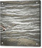 Lone Sea Gull Acrylic Print
