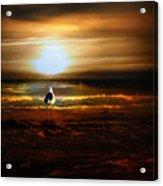 Lone Seagull Acrylic Print