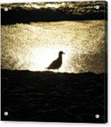 Lone Star Acrylic Print
