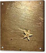 Lone Starfish On The Beach Acrylic Print
