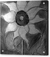 Lone Sunflower Iv Acrylic Print