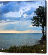 Lone Tree And Beach Flowers Acrylic Print