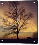 Lone Tree At Sunrise Acrylic Print