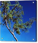 Lone Tree Hawaii Acrylic Print
