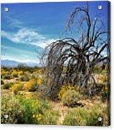 Lone Tree In Blooming Desert Acrylic Print