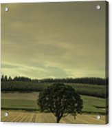 Lone Tree In The Field Acrylic Print