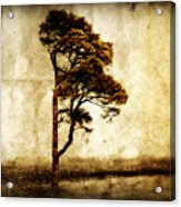 Lone Tree Acrylic Print by Julie Hamilton