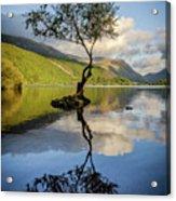 Lone Tree, Llyn Padarn Acrylic Print