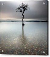 Lone Tree Loch Lomond Acrylic Print