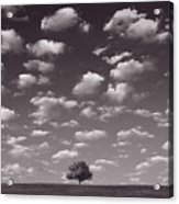 Lone Tree Morning In B And W Acrylic Print
