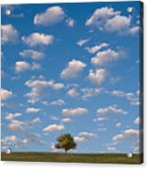 Lone Tree Morning Acrylic Print