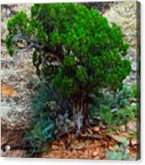 Lone Tree On A Cliff Acrylic Print