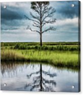Lone Tree Reflected Acrylic Print