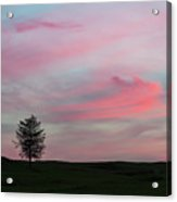 Lone Tree Sunset Acrylic Print