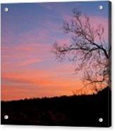 Lone Tree Sunset Acrylic Print