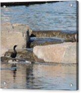 Lone Waterfowl Acrylic Print