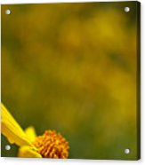 Lone Wildflower - Yellow Acrylic Print