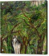 Lone Wolf Acrylic Print