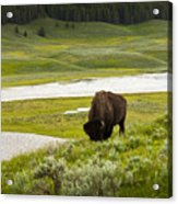 Lonely Bison Valley Acrylic Print